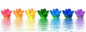 Chakra colors of lily flower upon water in white background