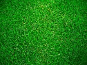 significato-dei-colori-verde